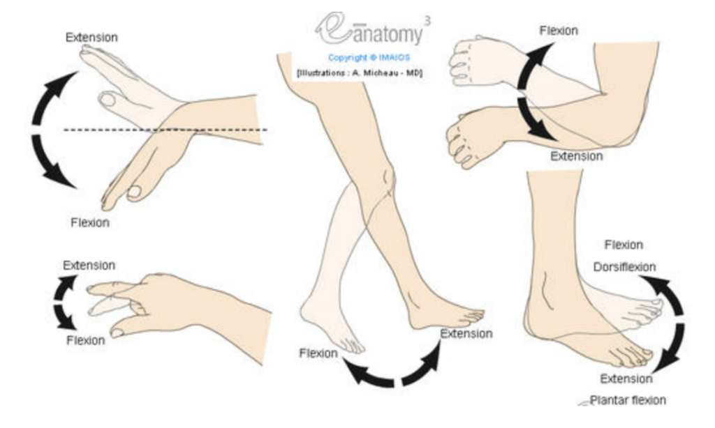 Flexion vs Extension